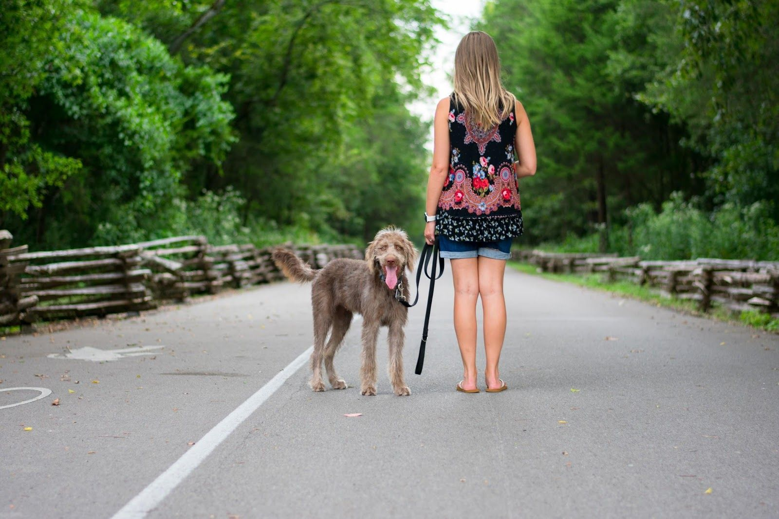 Physical activity - Taking dog for walk